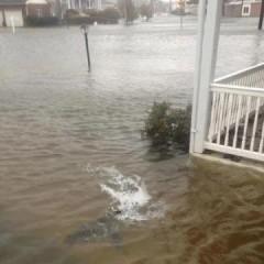 sandy uragano uno squalo per le strade