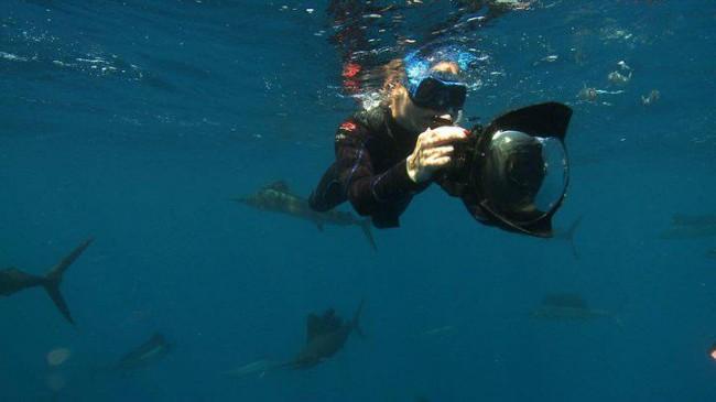 caccia di squali bianchi