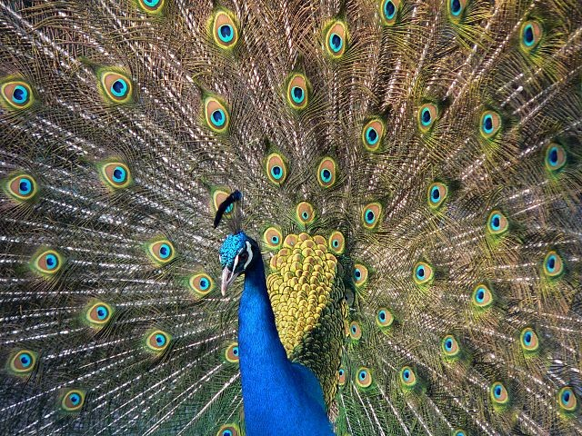 animale più bello del mondo immagini