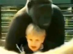 bambina gioca con gorilla